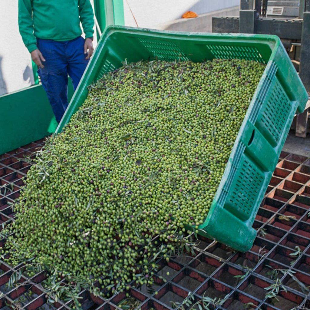 Descàrrega d'olives